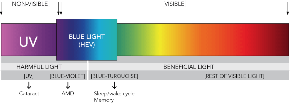 blue light and UV in light spectrum.png